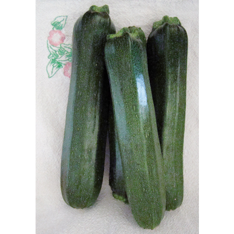 Courgette Black Beauty bio 1,7g