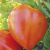 Tomate Oxheart bio 0,1g