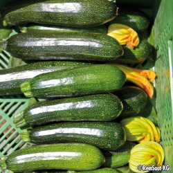 Courgette Zucchini bio 2g