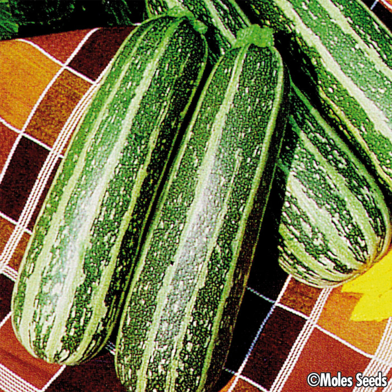 Courgette Tiger Cross F1 bio (10 graines)