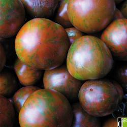 Tomate Black Zebra bio 0,15g