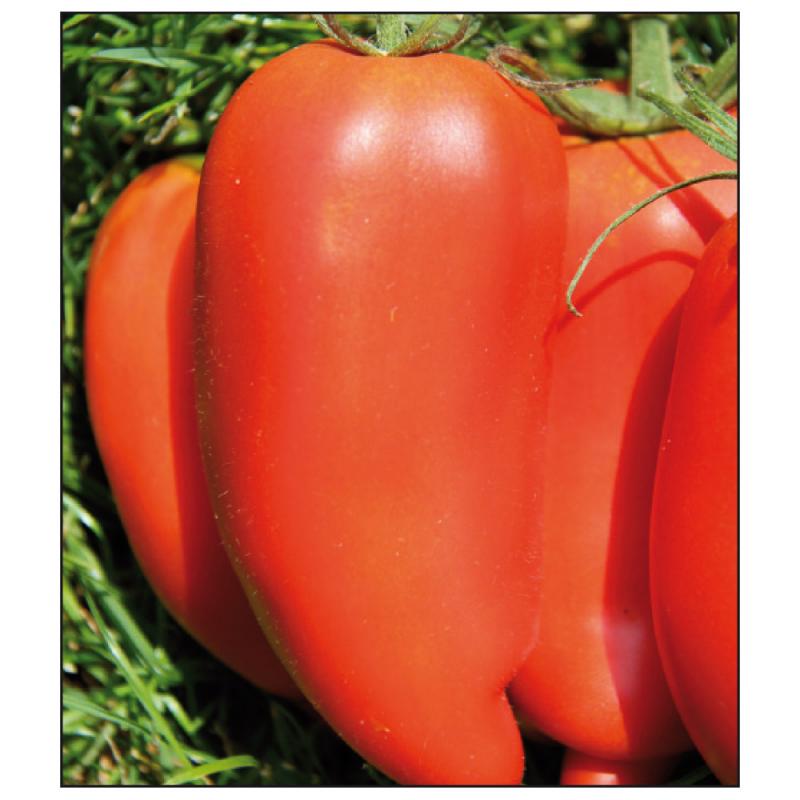 graine legume bio