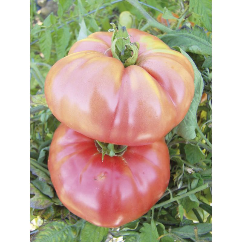 Tomate Berner Rose bio 0,25g