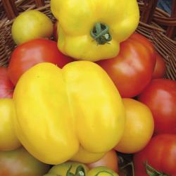 Tomate Poivron Jaune bio 0,2g
