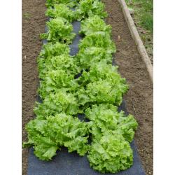 Feutre de Culture Pré-percé Salades