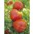 Tomate Petit Coeur de Boeuf bio 0,1g