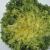 Chicorée frisée Grosse Pancalière bio 1g