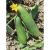 Concombre Le Généreux bio 0,5g