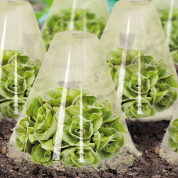 Lot de 12 cloches à salade
