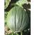 Potiron Vert Olive bio 3,2g