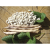 Haricot Nain à Ecosser suisse blanc bio 50g