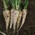 Carotte blanche demi-longue des Vosges bio 1g
