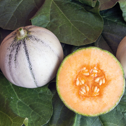 Melon Murrmel bio 12 graines