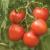 Tomate Dorenia bio 0,10g