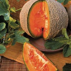 Melon Sucrin de tours bio 10 graines