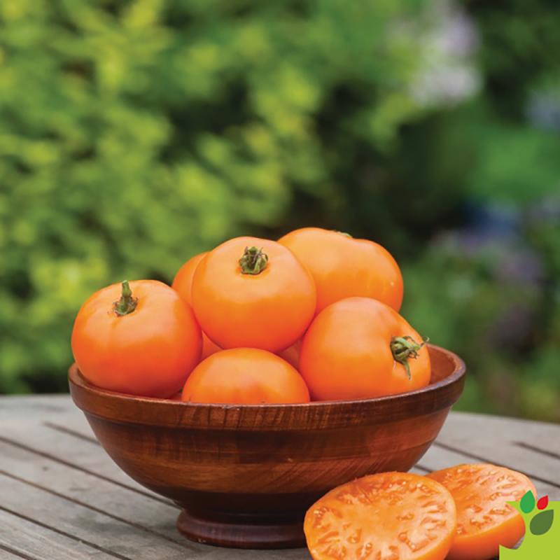 Tomate Orange Wellington F1 - 10 graines