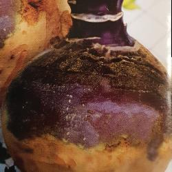 Navet rutabaga jaune à collet rouge 10g