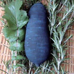 Radis d'hiver Violet de Gournay bio 2g