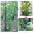 Eco-Tuteur à Tomates