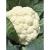 Chou fleur Odysseus bio 0,3g