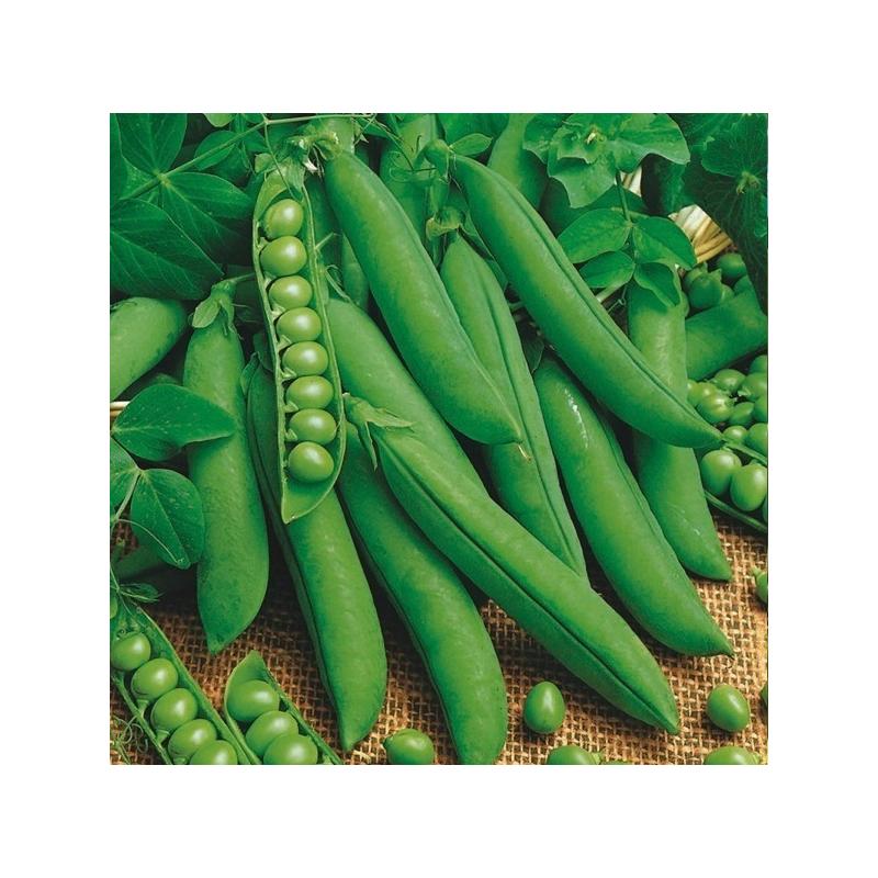 Pois à grains lisses Précovil Bio