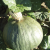 Potiron Doux Vert d'Hokkaido bio 2,5g