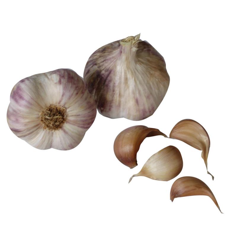 Ail violet Germidour Bio 250g