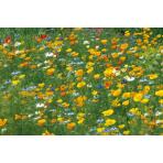 Rivière de fleurs durables