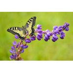Abri à Papillons