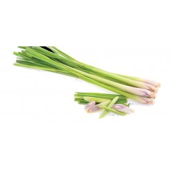 Plant de Lemon Grass (Citronnelle)