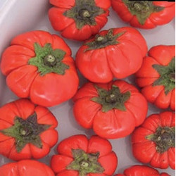 Aubergine Rouge de Turquie Bio