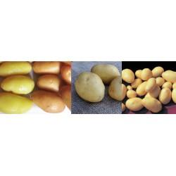 Offre Spéciale Pommes de Terre Bio
