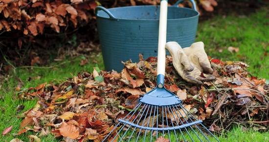 Que faire des feuilles mortes en hiver?