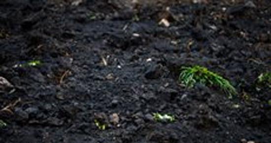 Mon sol est acide, que puis-je faire ?