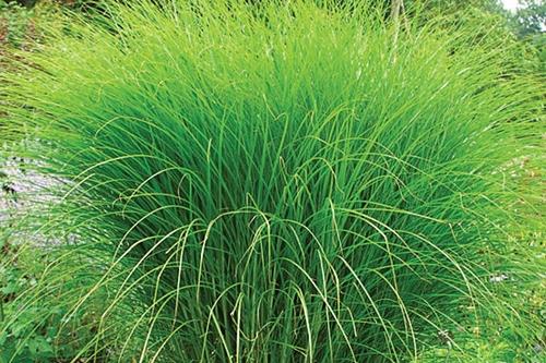 Pailler et nourrir le sol en permaculture