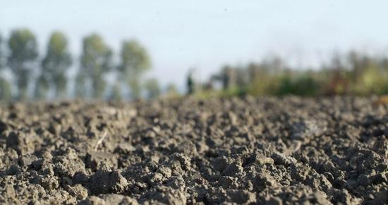 Mon sol est sableux, que puis-je faire ?