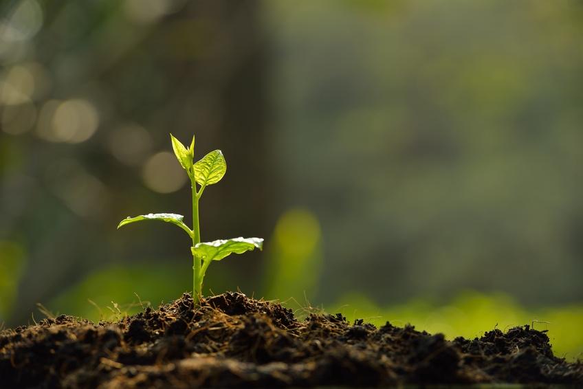 Que faire pour éviter la fonte des semis ?