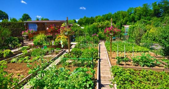 Comment désherber écologiquement mes allées, mon jardin, mon potager ?