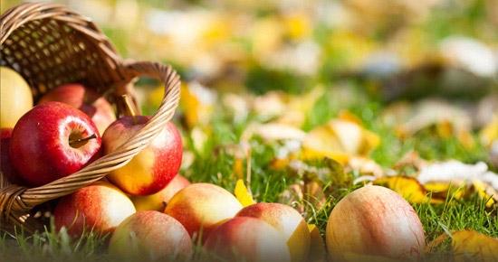 La cueillette des fruits et légumes